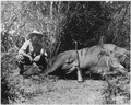 Ernest Hemingway on Safari in Africa - NARA - 192654.tif