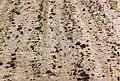 Erosion flächenhaft014.jpg