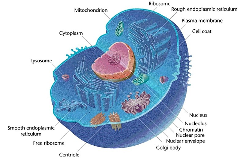 How to Take a Cell Apart, i.e. How to Perform Subcellular Fractionation