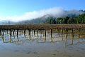 FEMA - 22376 - Photograph by Adam Dubrowa taken on 02-16-2006 in California.jpg