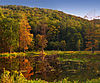 A wooded mountain with bright fall leaves is reflected in a small lake with many plants sticking out of the surface