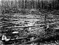 Fallen timber and debris, Washington, 1923 (KINSEY 2773).jpeg