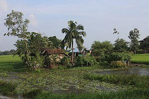 Sundarbans - House in Sundarbans with a pond and rice fields, 2010
