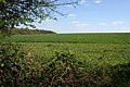 Farmland at the edge of Pasture Wood - geograph.org.uk - 405272.jpg