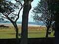 Farmland by Budle Bay - geograph.org.uk - 1555429.jpg
