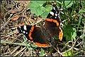 Fauna of Kopasz Hill, Tokaj, Hungary - panoramio (60).jpg