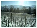 February Minus 10 Grad Celsius Weinberge Germany - Magic Rhine Valley Photography 2013 - panoramio.jpg