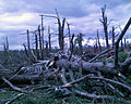 Felled trees and property damage from 2011 tornado; Brimfield, MA.jpg
