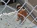Fence Factory Santa Maria Store Pet Adoptions - panoramio.jpg