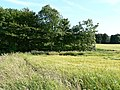 Field and woodland - geograph.org.uk - 26917.jpg