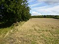 Field margin on arable land near Primrose Farm - geograph.org.uk - 540670.jpg