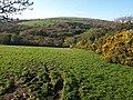 Field near Owley Moor Gate - geograph.org.uk - 1275457.jpg
