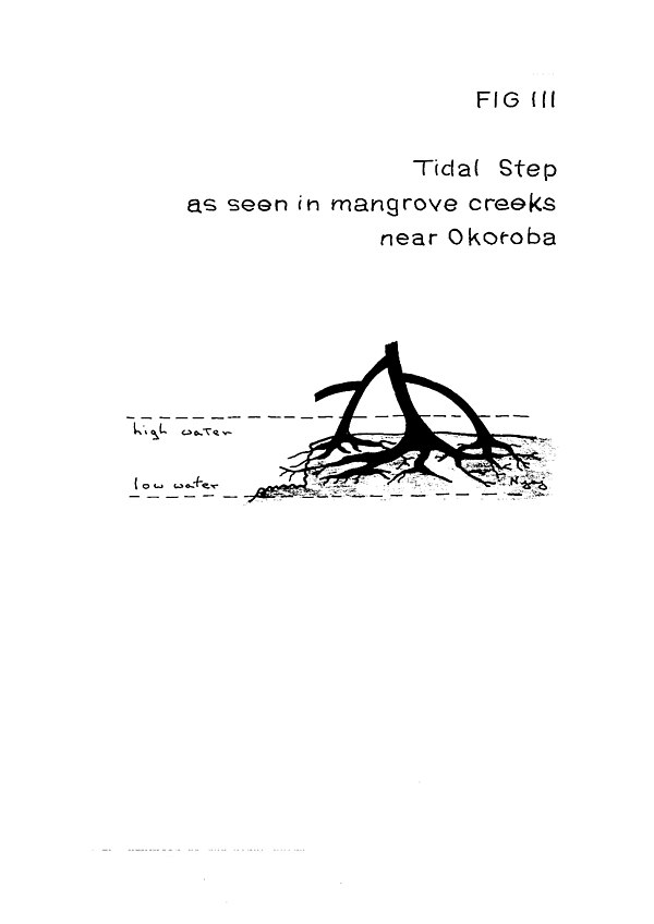 Fig III Tidal Step.jpg