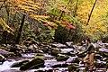 Fishing in the Little River, October 2011--Warren Bielenberg (25245399187).jpg
