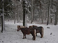 Flickr - Per Ola Wiberg ~ mostly away - ponys in the park.jpg