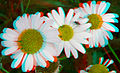 Flickr - jimf0390 - JimF 06-05-12 0016a flowers at Latham and 1 fly,-).jpg