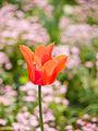 Flower (detail) (9029126236).jpg
