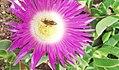 Flower 06 Haddad AYB.jpg