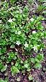 Flowers-Emma YSU 18.jpg