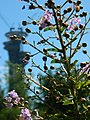 Flowers and Tower - panoramio.jpg