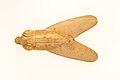 Fly Amulet MET 26.7.1285 EGDP010624.jpg