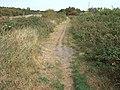 Footpath along the old railway line, Dersingham - geograph.org.uk - 1517409.jpg