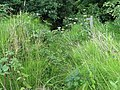 Footpath overgrown in Nuthurst, West Sussex.jpg