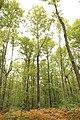 Forêt Départementale de Méridon à Chevreuse le 29 septembre 2017 - 24.jpg