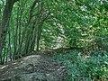 Forest - panoramio - paulnasca (83).jpg