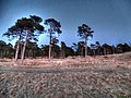 Forest Near Sea - panoramio.jpg