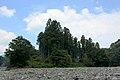 Forest in Kamiishizu, Ogaki City, Japan - panoramio.jpg
