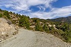 Forest road in Troodos Mountains, Cyprus.jpg
