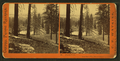 Forest view, near Dutch Flat, Placer County, by Watkins, Carleton E., 1829-1916.png