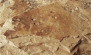 Raindrop impressions - Fossil raindrops