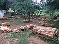 Fossilwoodparkthiruvakarai-4.JPG