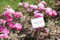France Bleu rose NIRP Parc Tete dOr.jpg