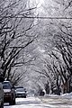 Frosted Street (2286642532).jpg