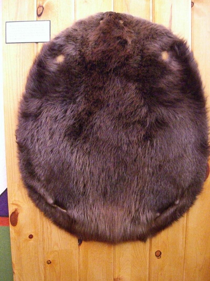 Fur trade museum beaver pelt.jpg