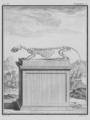 Furet, Squelette - Ferret, Skeleton - Gallica - ark 12148-btv1b2300254t-f30.png