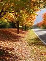 GCC entrance in fall4.jpg