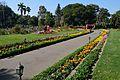 Garden - Agri-Horticultural Society of India - Alipore - Kolkata 2013-02-10 4803.JPG