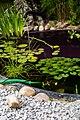 Garden Pond (218257421).jpeg