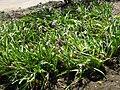 Gardenology-IMG 4984 hunt10mar.jpg