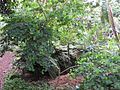 Gardenology.org-IMG 2617 rbgs11jan.jpg