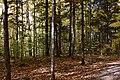 Gatineau Park, October 2018 (56) (31456250718).jpg