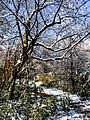Georgia snow IMG 4893 (25076055708).jpg