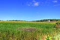 Gfp-wisconsin-glacial-drumlin-state-trail-farms.jpg
