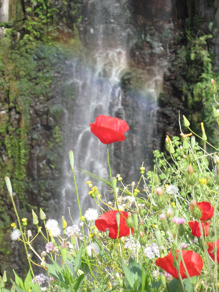 File Gilbon River Waterfall Rainbow Flower Jpg