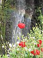 Gilbon River waterfall, rainbow, flower.jpg