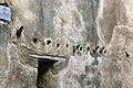 Gondar, cittadella, zona del bagno turco, 04 spogliatoio, appendiabiti.jpg